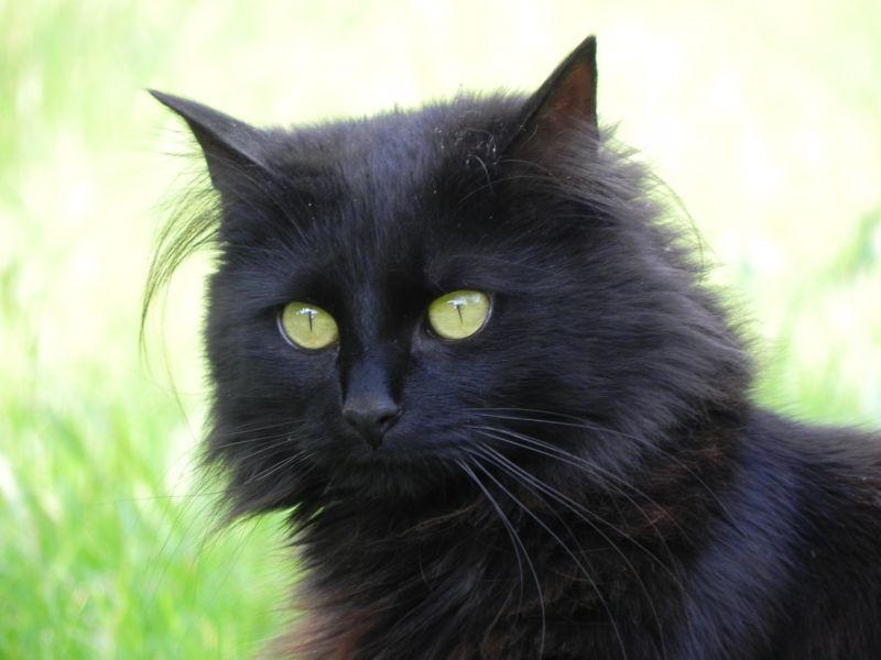 Le monde parallèle des chats.... Ces champions du sommeil paradoxal dans Les Chats dscn0087