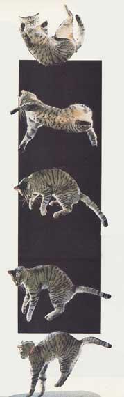 Les chats retombent toujours sur leurs pattes? dans Questions de sciences chatchute